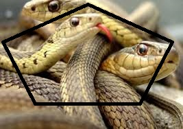 معلومات عن الثعابين