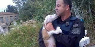 Έλληνας Αστυνομικός υιοθέτησε το κουτάβι που βρήκε να τρέχει έντρομο στην Εθνική Οδό