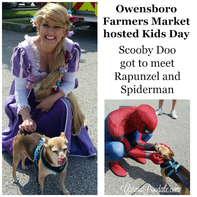 Scooby Doo #chihuahua met the characters #Rapunzel and #Spiderman