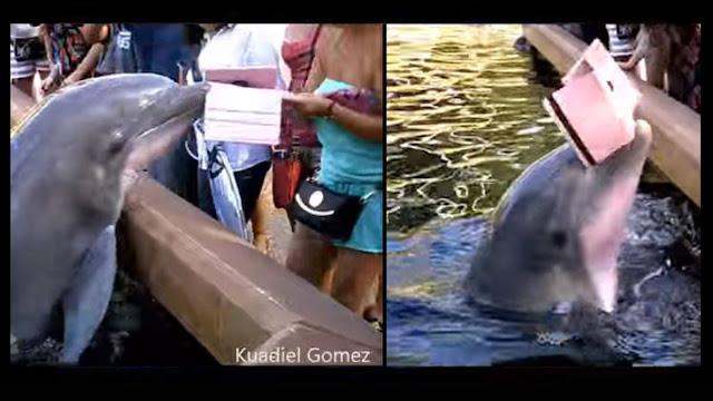dolphin ipad