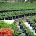 Agrowisata Di Probolinggo