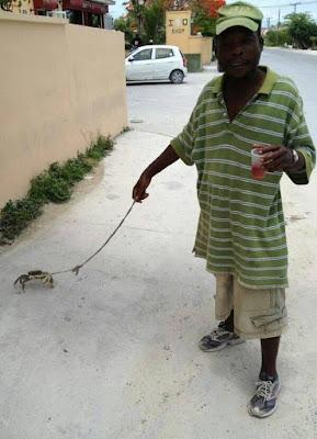 funny man walking a crab joke picture