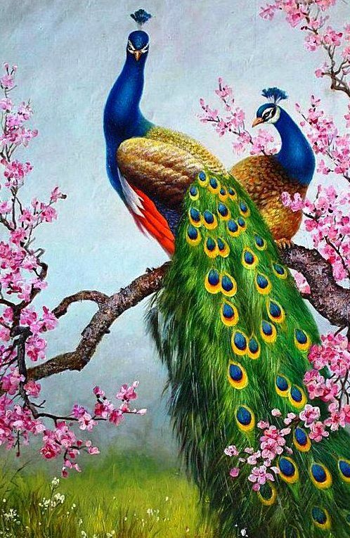 Pavão | As Mais Belas Obras de Arte com Pavões