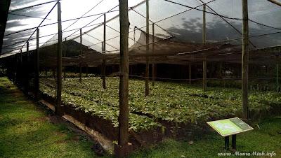 Malagos Garden Cacao Farm Davao City