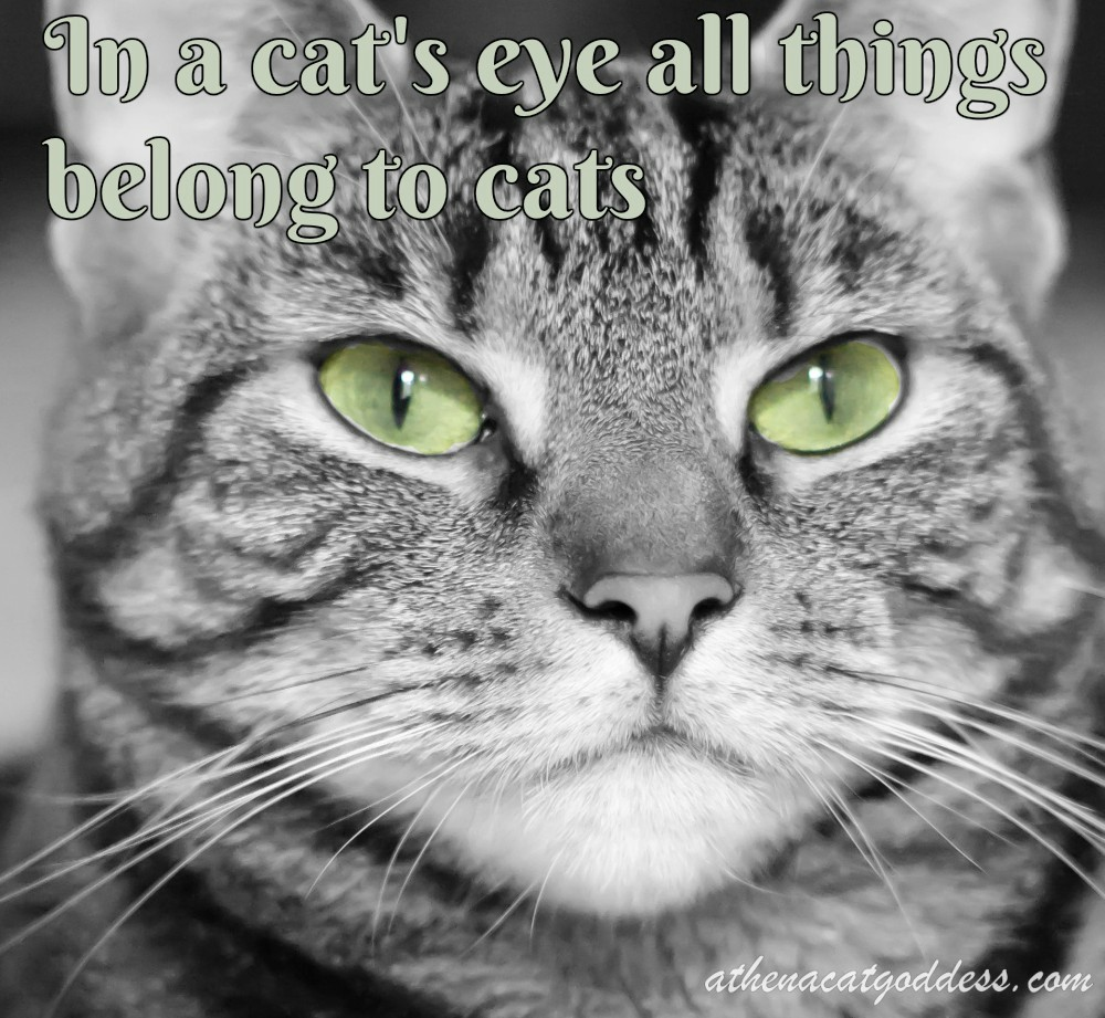 Cat Quotes: Athena Cat Goddess Wise Kitty: Wordless Wednesday Cat