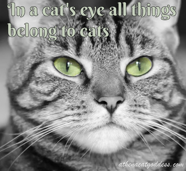 In a cat's eye all things belong to cats