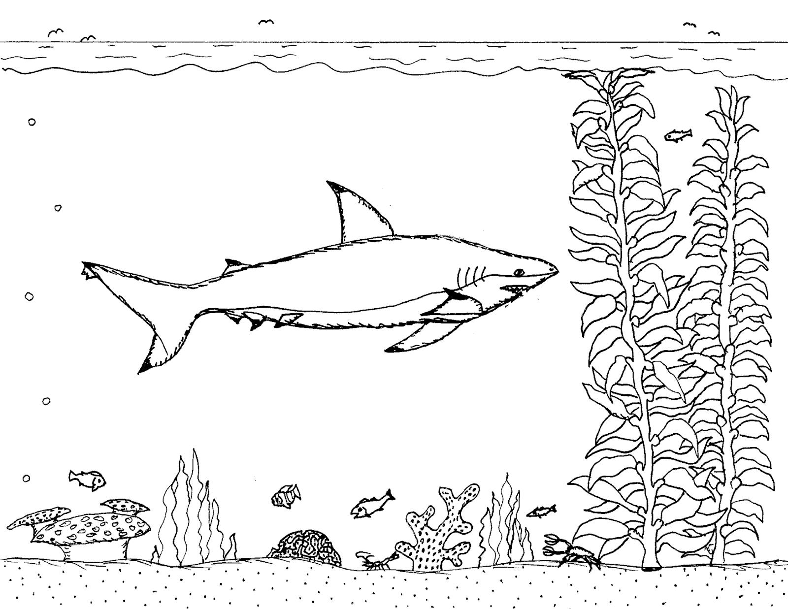 Robin's Great Coloring Pages: Blacktip Reef Shark