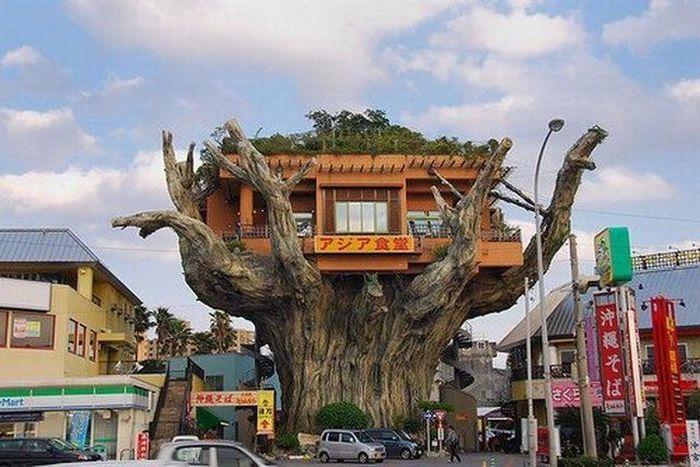 Restaurante casa del árbol