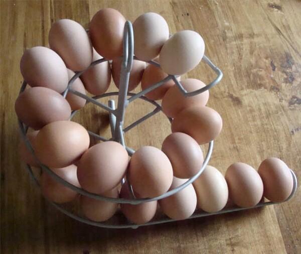 Cool Egg Holder