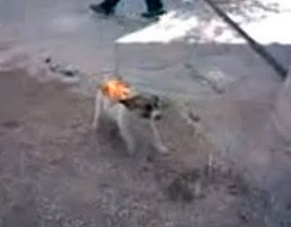 Stop Animal Abuse: Brazil: Youths Burns Puppy Alive