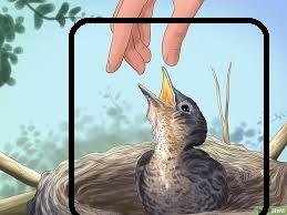 هل تحافظ على طيورك والحيوانات الأليفة الأخرى معًا؟