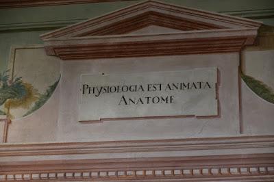 PARTICOLARE-DECORAZIONE-ANFITEATRO-ANATOMICO-OSPEDALE-DEL-CEPPO-PISTOIA