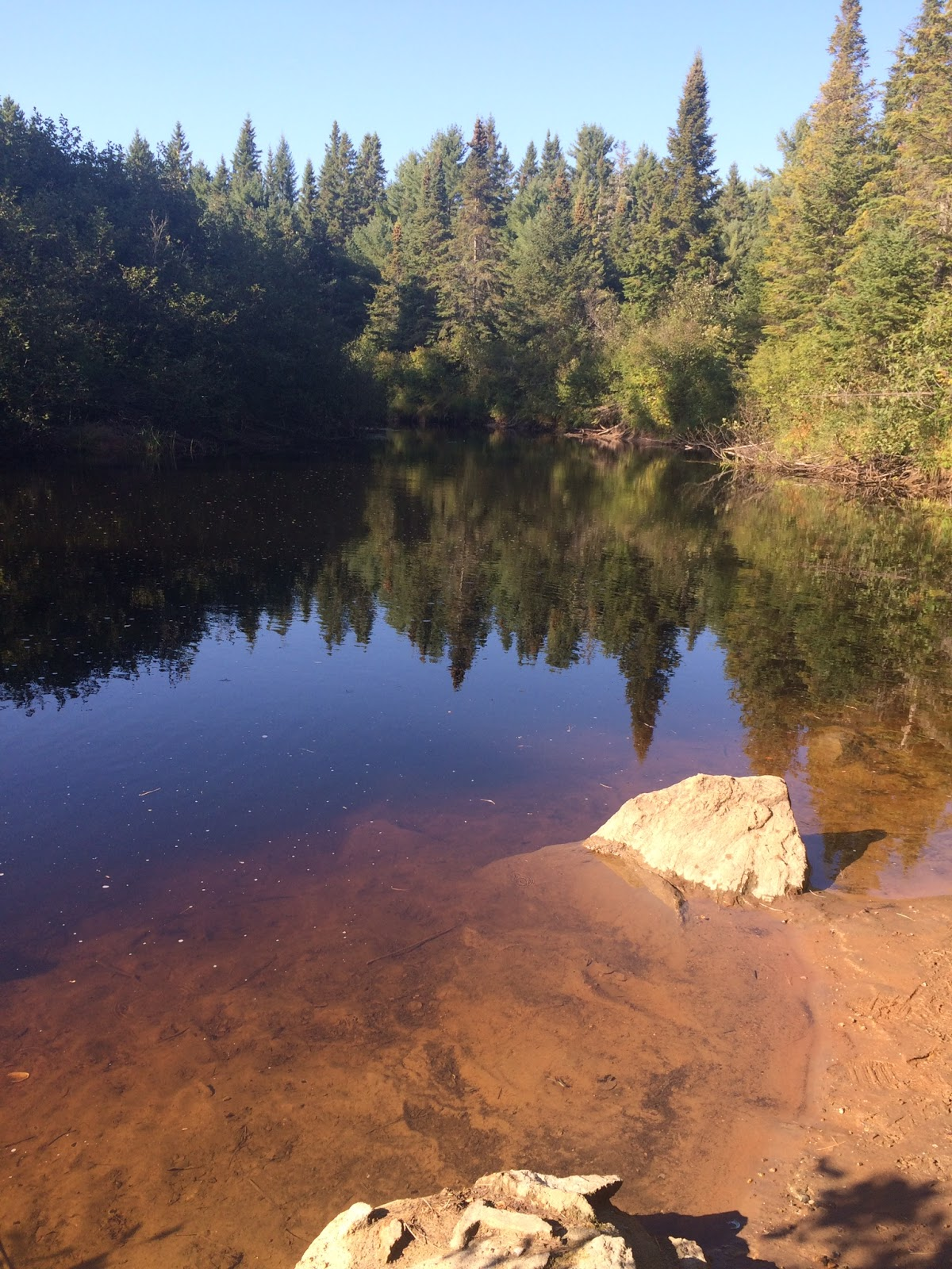 View on a lake in Algonquin Park, Canada