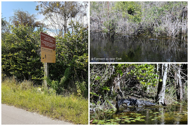 Florida - Everglades {EamK on Tour}