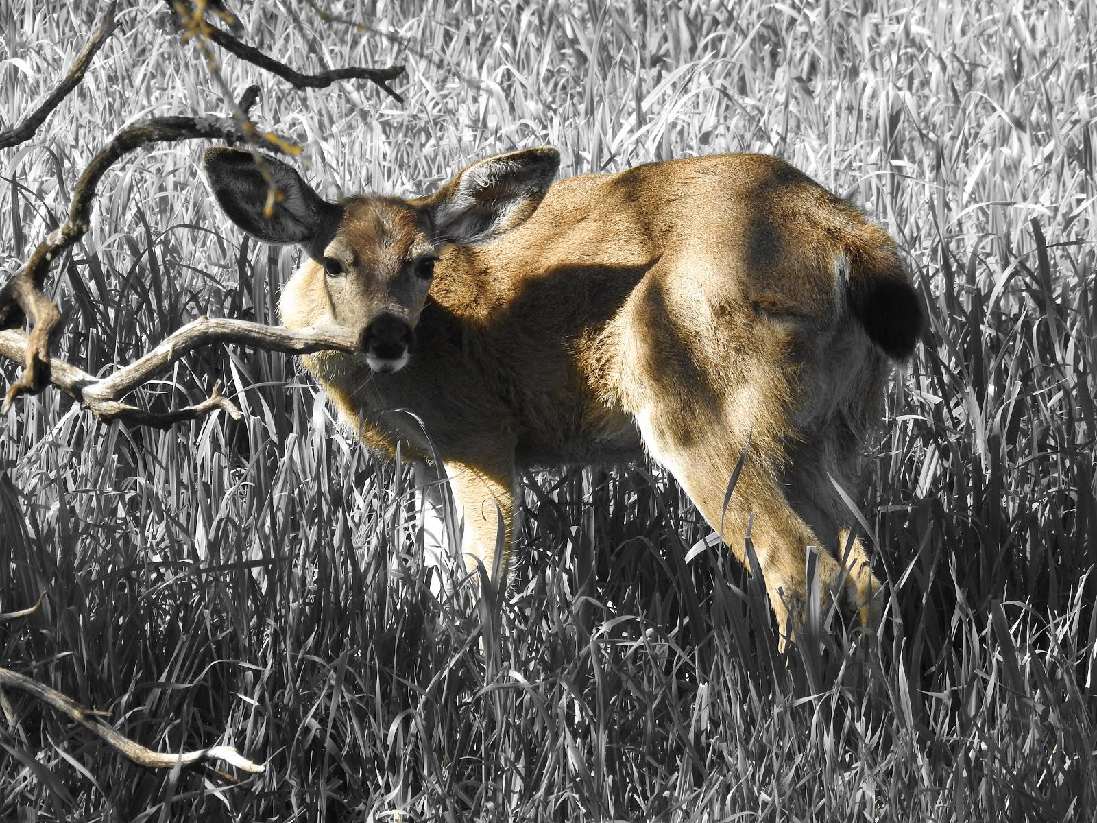 nature deer preservation