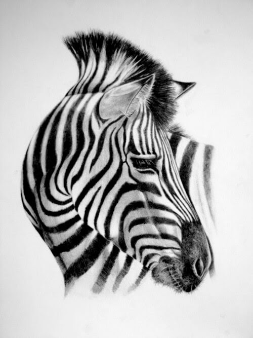 04-Zebra-Kelly-Six-www-designstack-co