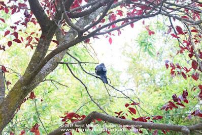 Prunus cerasifera, fotografía de jardines, jardinería, jardines