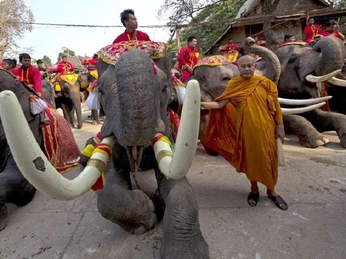 Слон, монах, праздник
