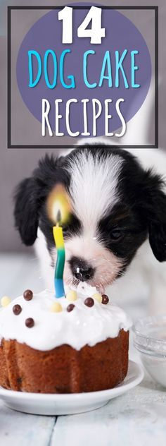 14 Dog Birthday Cake & Cupcake Homemade Recipes
