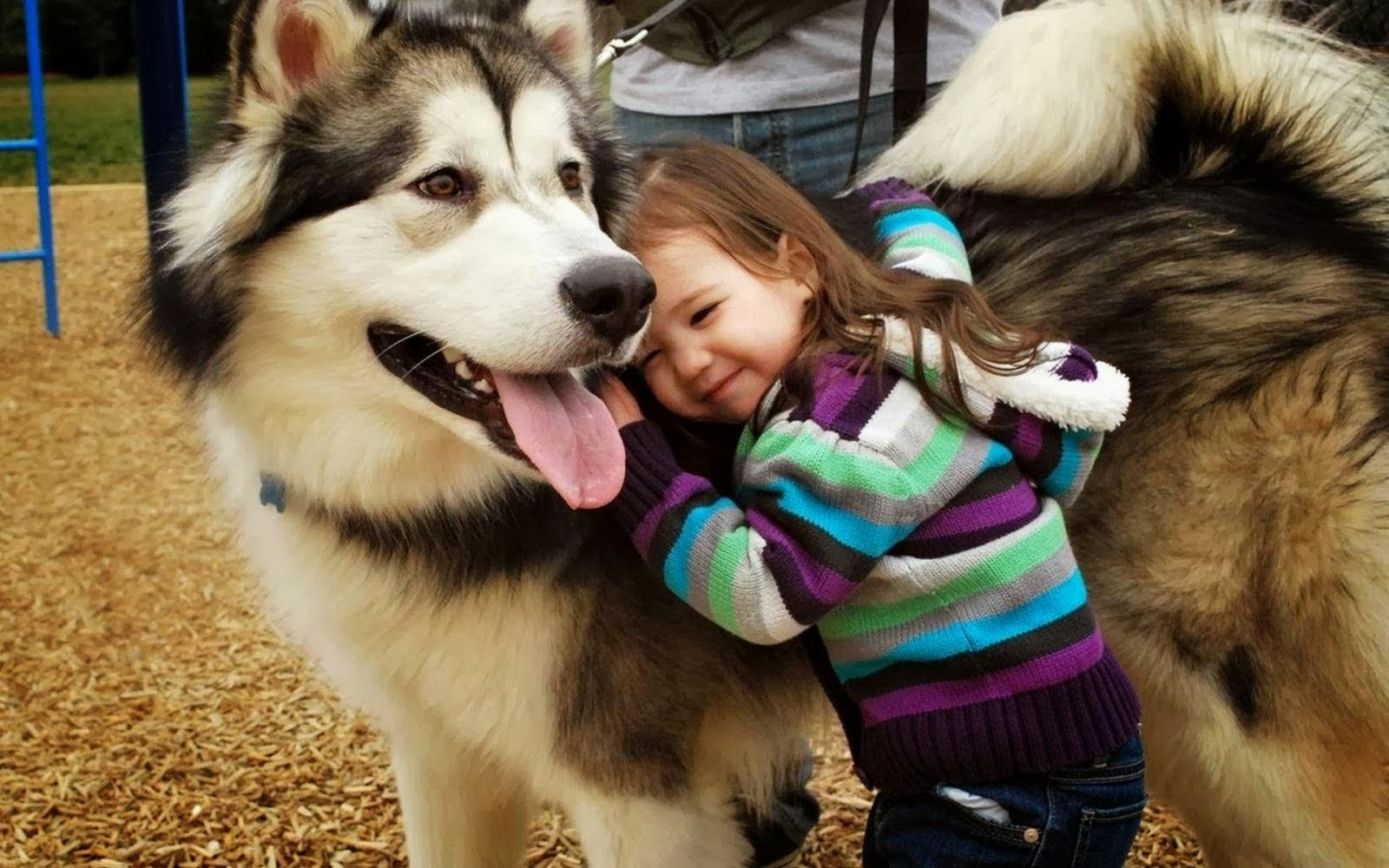 jamais maltrate um cão