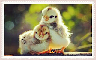 Very Cute Birds Images For Share