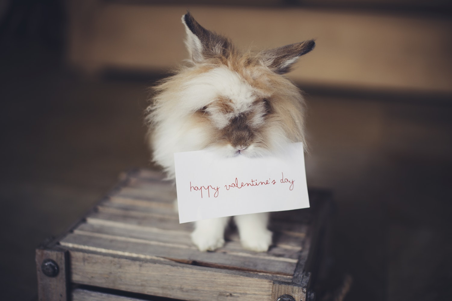 little bunny is holding valentines day card in his teeth
