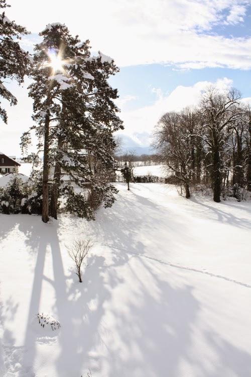 Residency Garden Snowed Under