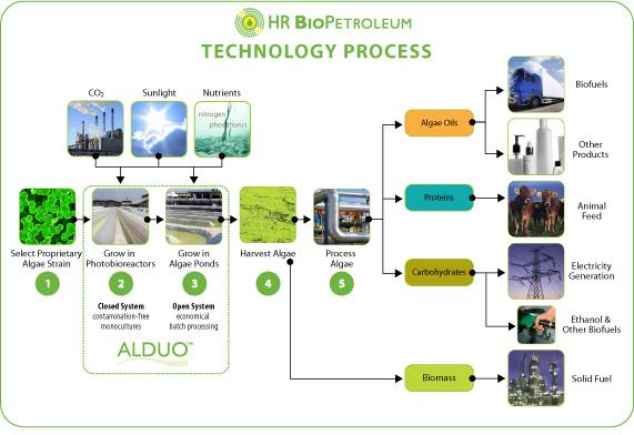 akshay  algae green fuel of the future