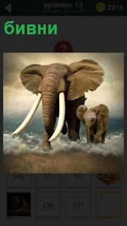 Идут два слона с громадными клыками бивнями по воде и маленький слоненок рядом с матерью