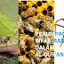 Perumpamaan Sifat Manusia Seperti Semut, Laba-Laba dan Lebah