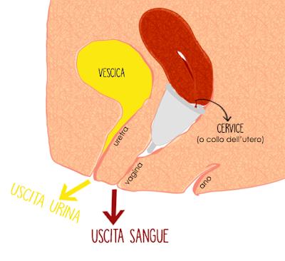 L'urina ed il sangue mestruale passano per due uscite diverse