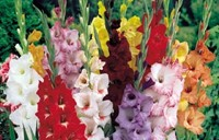 От цветов на которые смотрят к цветам которые едят, цветы, съедобные цветы, травы, съедобные травы, какие цветы можно есть, какие цветы нельзя есть, цветы в кулинарии, съедобный букет, какие цветы можно добавлять в еду, советы кулинарные, экзотическая кулинария, еда, кулинария, едят ли цветы, как есть цветы, рецепты из цветов, кОт цветов на которые смотрят к цветам которые едят, цветы, съедобные цветы, травы, съедобные травы, какие цветы можно есть, какие цветы нельзя есть, цветы в кулинарии, съедобный букет, какие цветы можно добавлять в еду, советы кулинарные, экзотическая кулинария, еда, кулинария, едят ли цветы, как есть цветы, рецепты из цветов, как добавлять цветы в еду, съедобные цветы, съедобные цветы в кулинарии, живые цветы в дизайне, съедобные цветы для женщин, съедобные комнатные растения, какие бывают цветы для кулинарии, цветы в кулинарии, цветы для украшения блюд, вкусные цветы, как сделать съедобный букет, настурция, съедобные букеты, какие цветы можно есть, какие цветы нельзя есть, пион, какие цветы пригодны в пищу, съедобные цветки в горшке, съедобные цветки растений, съедобные цветки кактуса, съедобные цветки лилии, съедобные цветки гибискуса, настурция цветки съедобные, какие цветы можно есть, какие части цветков можно есть, ядовитые цветки, как есть цветы, декор блюд съедобными цветами,ак добавлять цветы в еду, съедобные цветы
