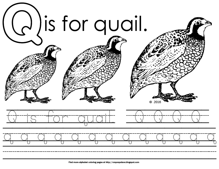 Q Is For Quail Alphabet Coloring Page