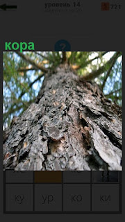 Высокое дерево, вид снизу на кору и ветки идущие на верх