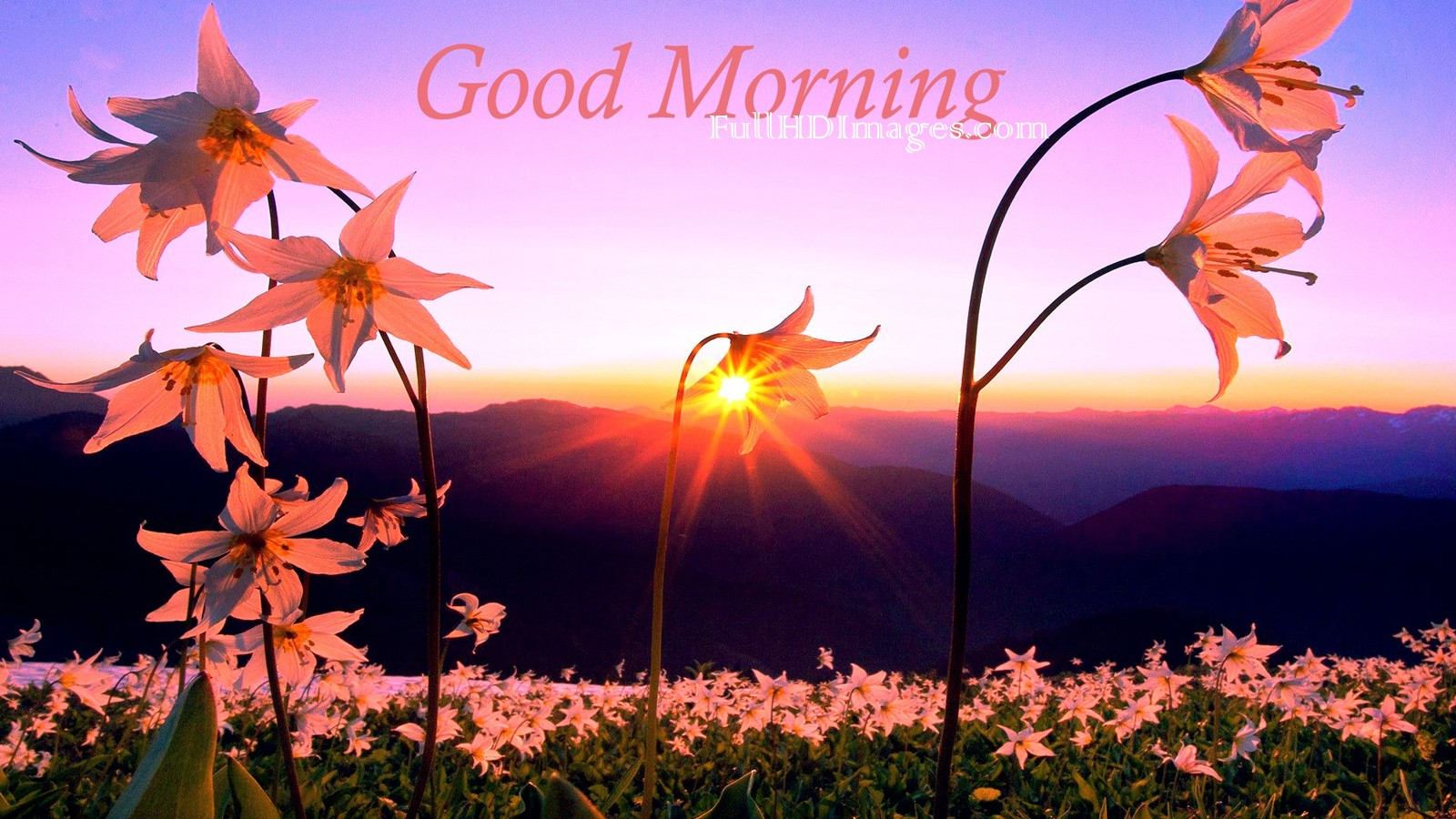 Good morning love flower images good morning flower images for good morning flower for girlfriend beautiful morning flowers good morning flower images for facebook good morning flower images free download izmirmasajfo