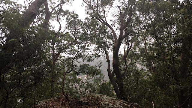 Misty Morning Walks