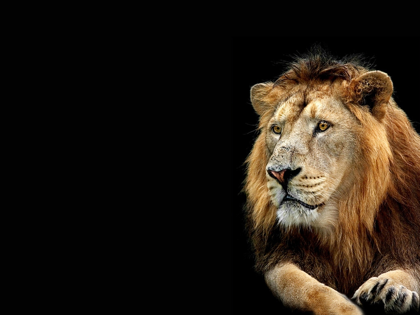 Animals Lion Wallpapers Hd Desktop And Mobile Backgrounds: Nature Wallpaper