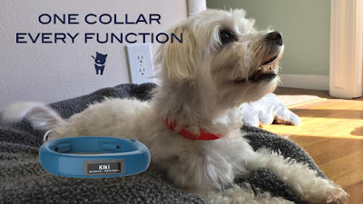 Multi-Function Smart Collar