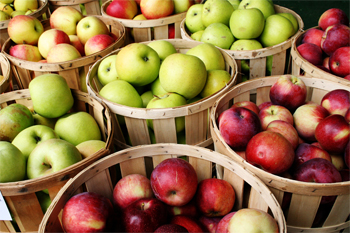 image of bushels of apples