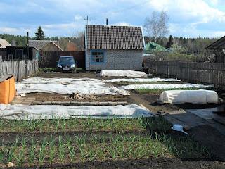 В мае посадки приходится защищать от заморозков