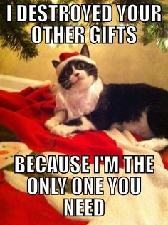 funny cat marry xmas christmas meme