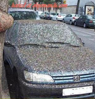 kereta kena berak burung