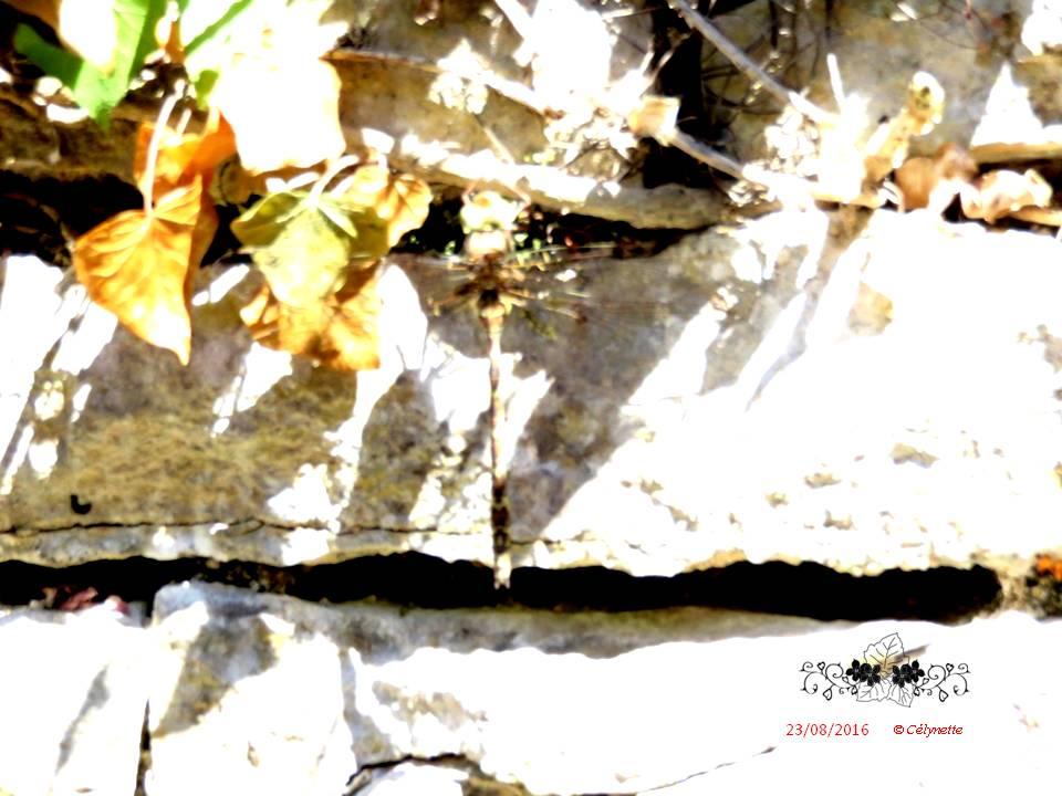 Bêtes à plumes, à pwal, de tout bord, mère nature qui nous gâte... Diapositive23