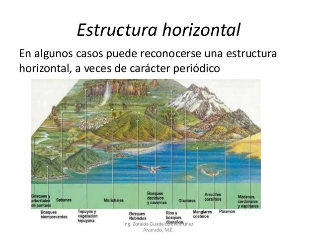 Ecologia Tipos De Estratificacion Ecologica