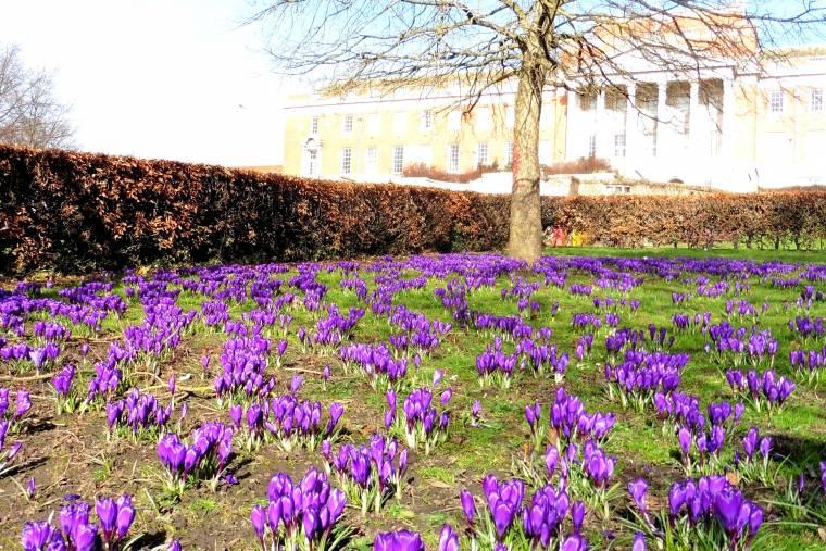 Spring Has Sprung: Wednesday Blog Hop