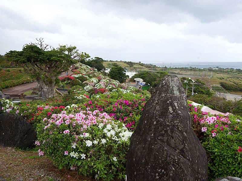 landscape, flowers, Azalea