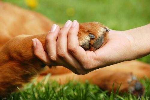 puppies  Artrite em cães Causas e Tratamento