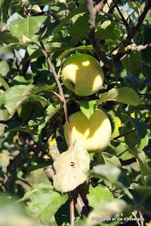 Pommes d' Auvergne.