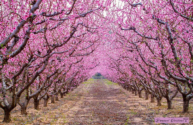 4. Blooming Almonds - 29 Wonderful Paths