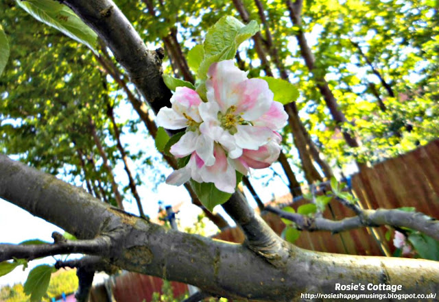 The Picture Perfect Project May Apple Blossom